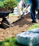 Sử dụng phân bón cho cây đậu phộng (lạc)