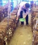 Mô hình trồng nấm rơm trong nhà