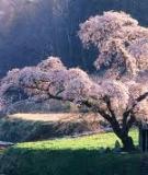 Sách: Japan
