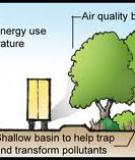 Air Quality, Pollution, and Trees