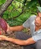 Bệnh thường gặp trên cây Ca Cao