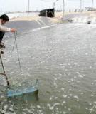 Kỹ thuật nuôi cá Bống tượng – Kỹ thuật sản xuất giống