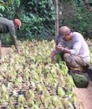 Kỹ thuật trồng Ca Cao