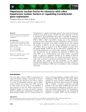 Báo cáo khoa học: Hepatocyte nuclear factor-4a interacts with other hepatocyte nuclear factors in regulating transthyretin gene expression