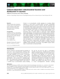 Báo cáo khoa học: Calcium-dependent mitochondrial function and dysfunction in neurons