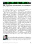 Báo cáo khoa học: DNA G-quadruplex: structure, function and human disease ´ ´ Jaime Gomez-Marquez