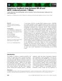 Báo cáo khoa học: Regulatory feedback loop between NF-jB and MCP-1-induced protein 1 RNase