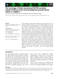 Báo cáo khoa học: The tetralogy of Fallot-associated G274D mutation impairs folding of the second epidermal growth factor repeat in Jagged-1