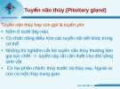 Tuyến não thùy (Pituitary gland)