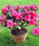 Những loài cây bạn nên trồng trong nhà để tốt cho sức khỏe