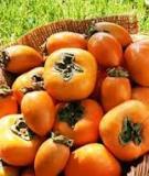 Phương pháp mới làm chín trái cây an toàn cho sức khỏe