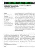 Báo cáo khoa học: Perturbation of membranes by the amyloid b-peptide – a molecular dynamics study