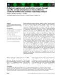 Báo cáo khoa học: Cobalamin uptake and reactivation occurs through specific protein interactions in the methionine synthase–methionine synthase reductase complex
