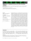 Báo cáo khoa học: Regulation of cathepsin B activity by 2A2 monoclonal antibody