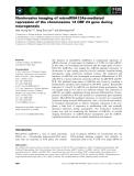 Báo cáo khoa học: Noninvasive imaging of microRNA124a-mediated repression of the chromosome 14 ORF 24 gene during neurogenesis