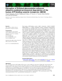 Báo cáo khoa học: Disruption of N-linked glycosylation enhances ubiquitin-mediated proteasomal degradation of the human ATP-binding cassette transporter ABCG2