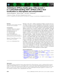 Báo cáo khoa học: Arabidopsis ATPase family gene 1-like protein 1 is a calmodulin-binding AAA+-ATPase with a dual localization in chloroplasts and mitochondria