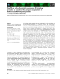 Báo cáo khoa học: Coq10, a mitochondrial coenzyme Q binding protein, is required for proper respiration in Schizosaccharomyces pombe
