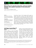 Báo cáo khoa học: Ribonuclease H: molecular diversities, substrate binding domains, and catalytic mechanism of the prokaryotic enzymes
