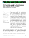 Báo cáo khoa học: Functional role of fumarate site Glu59 involved in allosteric regulation and subunit–subunit interaction of human mitochondrial NAD(P)+-dependent malic enzyme