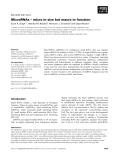 Báo cáo khoa học: MicroRNAs – micro in size but macro in function Sunit K. Singh1,2, Manika Pal Bhadra3, Hermann J. Girschick2 and Utpal Bhadra4