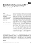 Báo cáo khoa học: Probing the determinants of coenzyme specificity in Peptostreptococcus asaccharolyticus glutamate dehydrogenase by site-directed mutagenesis