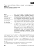 Báo cáo khoa học: Tumor necrosis factor-a-induced caspase-1 gene expression