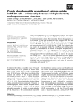Báo cáo khoa học: Casein phosphopeptide promotion of calcium uptake in HT-29 cells ) relationship between biological activity and supramolecular structure