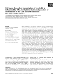Báo cáo khoa học: Cell cycle-dependent transcription of cyclin B2 is influenced by DNA methylation but is independent of methylation in the CDE and CHR elements