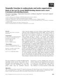 Báo cáo khoa học: Verprolin function in endocytosis and actin organization Roles of the Las17p (yeast WASP)-binding domain and a novel C-terminal actin-binding domain