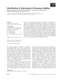 Báo cáo khoa học: Identification of three phases in Onconase refolding