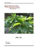 """Đề tài """" Tìm hiểu quy trình sản xuất đường ăn kiêng từ cây cỏ ngọt """""""
