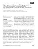 Báo cáo khoa học: Light regulation of CaS, a novel phosphoprotein in the thylakoid membrane of Arabidopsis thaliana