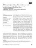 Báo cáo khoa học: RNAi-mediated knockdown of juvenile hormone acid O-methyltransferase gene causes precocious metamorphosis in the red flour beetle Tribolium castaneum