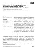 Báo cáo khoa học: Identification of a glycosphingolipid transfer protein GLTP1 in Arabidopsis thaliana