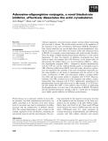 Báo cáo khoa học: Adenosine–oligoarginine conjugate, a novel bisubstrate inhibitor, effectively dissociates the actin cytoskeleton