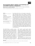 Báo cáo khoa học: The tetraspanin CD151 regulates cell morphology and intracellular signaling on laminin-511