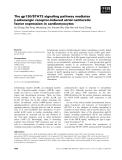 Báo cáo khoa học: The gp130⁄STAT3 signaling pathway mediates b-adrenergic receptor-induced atrial natriuretic factor expression in cardiomyocytes