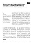 Báo cáo khoa học: Phosphorylation of cyclin dependent kinase 4 on tyrosine 17 is mediated by Src family kinases
