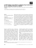Báo cáo khoa học: Is ATP binding responsible for initiating drug translocation by the multidrug transporter ABCG2?