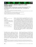Báo cáo khoa học: KCTD5, a putative substrate adaptor for cullin3 ubiquitin ligases