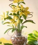 Làm bình hoa ly vàng rực rỡ đón năm mới