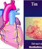 4 dấu hiệu cảnh báo bạn bị bệnh tim