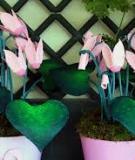 Biến hộp đựng trứng thành hoa anh thảo dễ thương