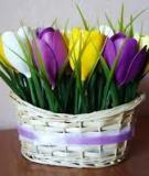 Giỏ hoa tulip khoe sắc cho mùa đông ấm áp