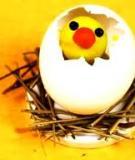 Tận dụng vỏ trứng làm đồ chơi cho bé
