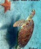 Stars And Turtles