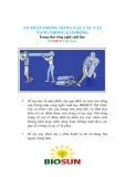 An toàn trong mang vác các vật nặng trong lao động