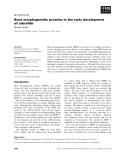 Báo cáo khoa học:  Bone morphogenetic proteins in the early development of zebrafish