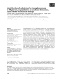 Báo cáo khoa học: Identification of substrates for transglutaminase in Physarum polycephalum, an acellular slime mold, upon cellular mechanical damage